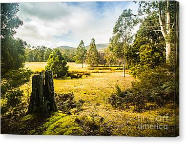 Mount Field Forest In Tasmania Canvas Print by Jorgo Photography - Wall Art Gallery