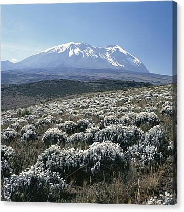 Mount Kilimanjaro, The Breach Wall Canvas Print by David Pluth