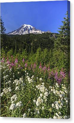 Mount Rainier Canvas Print by Adam Romanowicz