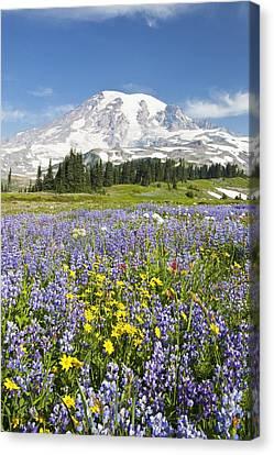 Mount Rainier National Park Canvas Print by Craig Tuttle