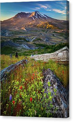 Mount Saint Helens Canvas Print by Inge Johnsson