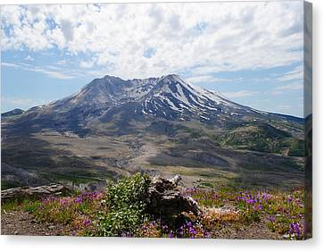 Mount Saint Helens Canvas Print by Robert  Moss