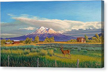 Mount Shasta Canvas Print by Paul Krapf