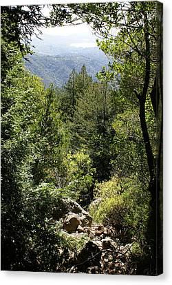 Mount Tamalpais Forest View Canvas Print by Ben Upham III