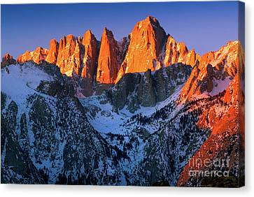 Mount Whitney Canvas Print by Inge Johnsson