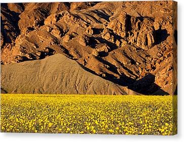 Mountain And Wildflowers #2 - Death Valley Canvas Print by Stuart Litoff