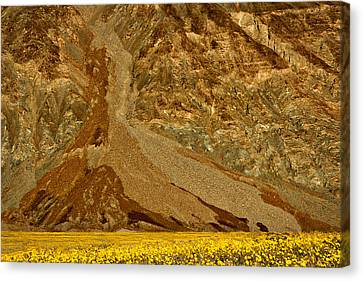 Mountain And Wildflowers - Death Valley Canvas Print by Stuart Litoff