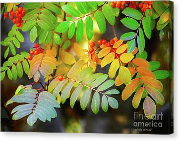 Mountain Ash Fall Color Canvas Print