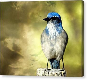 Mountain Bluebird Canvas Print by Marty Koch