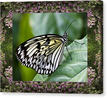 Canvas Print featuring the photograph Mountain Butterfly by Bell And Todd