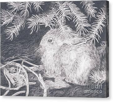 Mountain Cottontail Canvas Print
