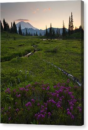 Mountain Heather Sunset Canvas Print by Mike  Dawson