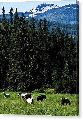 Mountain Herd Canvas Print