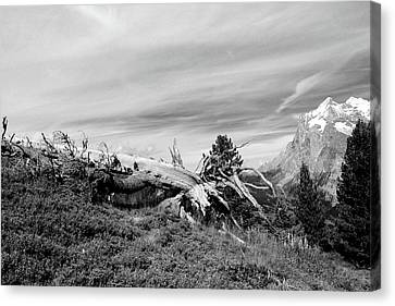 Mountain Landscape With Fallen Tree And View At Alps In Switzerland Canvas Print