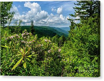 Canvas Print featuring the photograph Mountain Laurel And Ridges by Thomas R Fletcher