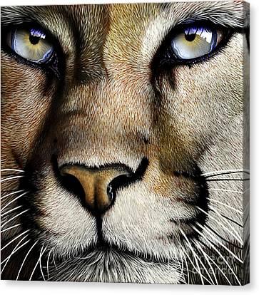 Mountain Lion Canvas Print - Mountain Lion by Jurek Zamoyski
