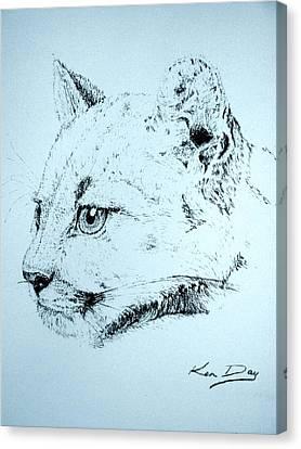 Mountain Lion Canvas Print by Ken Day