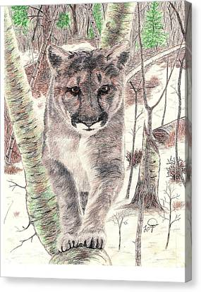 Colorado Mountain Lion Canvas Print