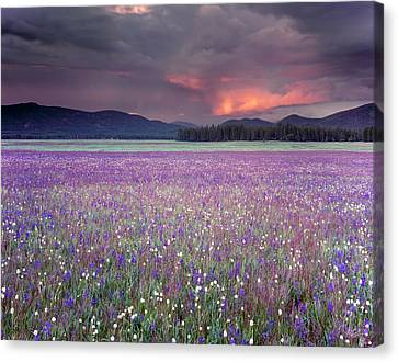 Shower Canvas Print - Mountain Meadow Purple by Leland D Howard