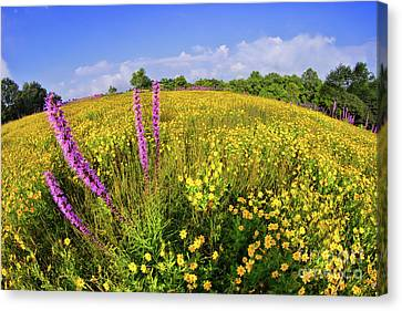 Canvas Print featuring the photograph Mountain Of Summer Flowers In The Blue Ridge by Dan Carmichael