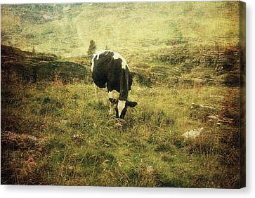 Mountain Pastures  Canvas Print