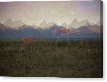 Mountain Pronghorns Canvas Print