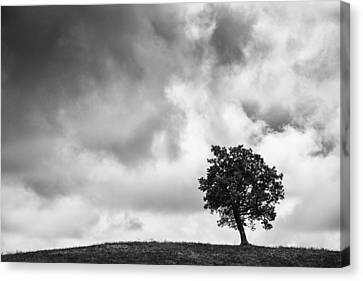 Tree On Hill - Doughton Park Blue Ridge Parkway Canvas Print