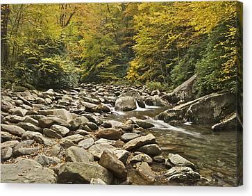 Smokey Mountains Canvas Print - Mountain Stream  6058 by Michael Peychich