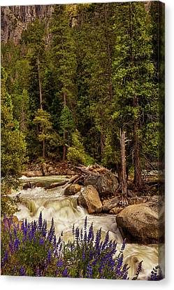 Mountain Stream Canvas Print by Andrew Soundarajan