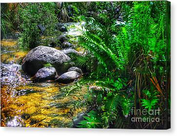 Mountain Stream Canvas Print by Blair Stuart
