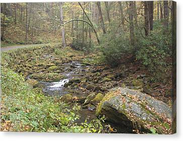 Mountain Stream Canvas Print by Cindy and Dave Hicks