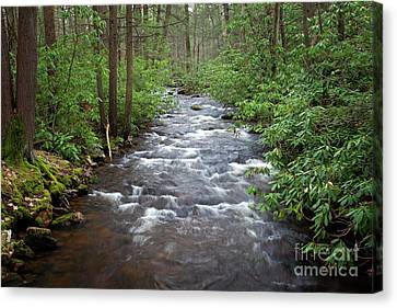 Canvas Print featuring the photograph Mountain Stream Laurel by John Stephens