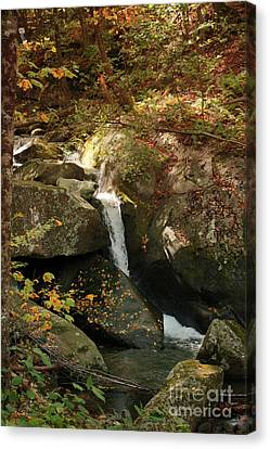 Mountain Stream Canvas Print by Rebecca Davis