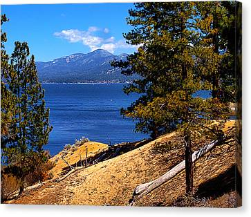 Mountain Thru The Pines Canvas Print