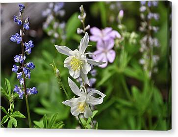 Mountain Wildflowers Canvas Print by Greg Norrell