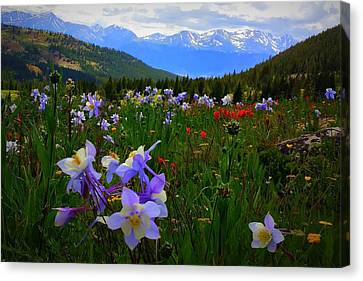 Canvas Print featuring the photograph Mountain Wildflowers by Karen Shackles