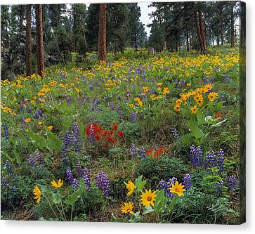 Mountain Wildflowers Canvas Print by Leland D Howard