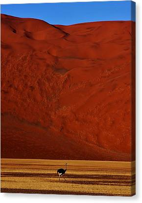 Mountainous Dune Canvas Print by Stacie Gary