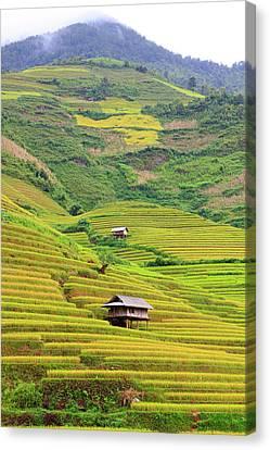 Mountainous Rice Field Canvas Print by Akari Photography