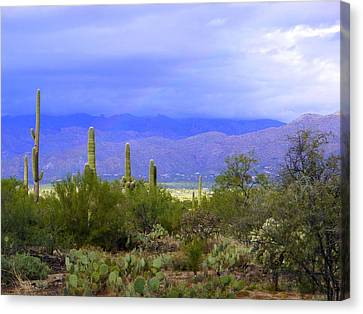 Rain Barrel Canvas Print - Mountains And Saguaros by Teresa Stallings