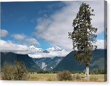 Canvas Print featuring the photograph Mountains And Tree, Lake Matheson by Gary Eason