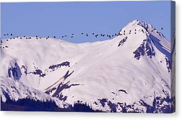 Mountaintop Geese II Canvas Print