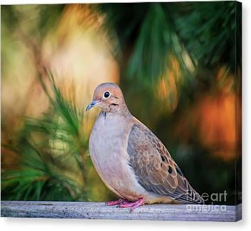 Canvas Print featuring the photograph Mourning Dove Bathed In Autumn Light by Kerri Farley of New River Nature