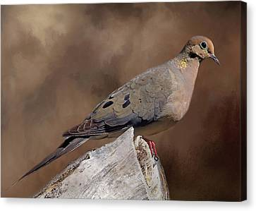 Canvas Print featuring the photograph Mourning Dove by Donna Kennedy