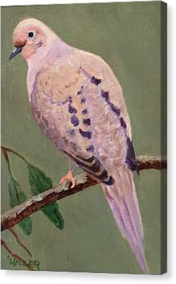Mourning Dove Canvas Print by Linda Hiller