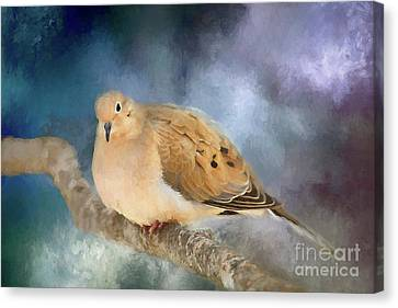 Mourning Dove Of Winter Canvas Print by Darren Fisher