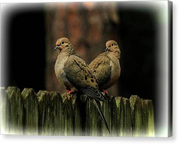 Mourning Doves Canvas Print by Olahs Photography