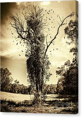 Mourning Tree Canvas Print by Jorgo Photography - Wall Art Gallery