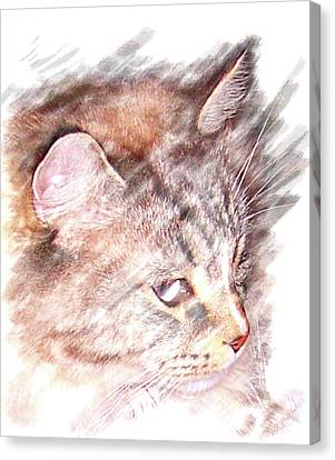 Canvas Print featuring the photograph Mouser by Barbara MacPhail