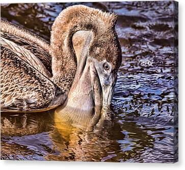 South Carolina State Bird Canvas Print - Mouth Full by Joe Granita